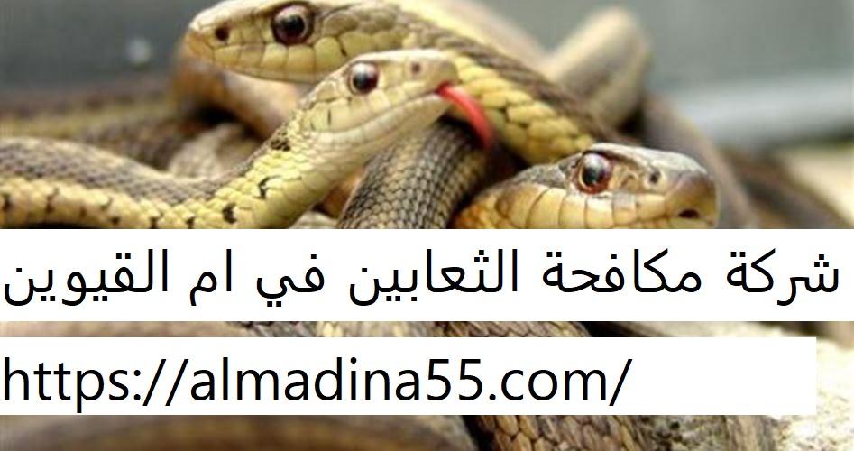 شركة مكافحة الثعابين في ام القيوين