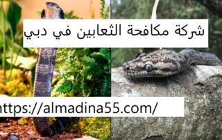 شركة مكافحة الثعابين في دبي