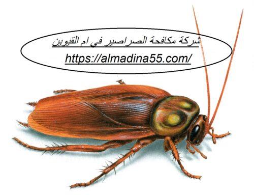 شركة مكافحة الصراصير في ام القيوين |0526018454| رش مبيدات