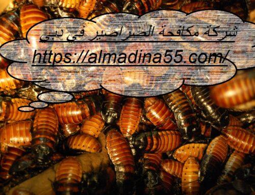 شركة مكافحة الصراصير في دبي |0526018454| مكافحة حشرات