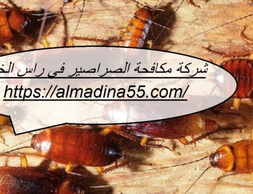 شركة مكافحة الصراصير في راس الخيمة |0526018454| ابادة تامة