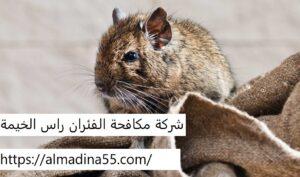 شركة مكافحة الفئران راس الخيمة