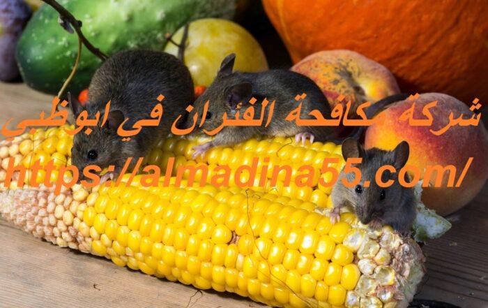 شركة مكافحة الفئران في ابوظبي