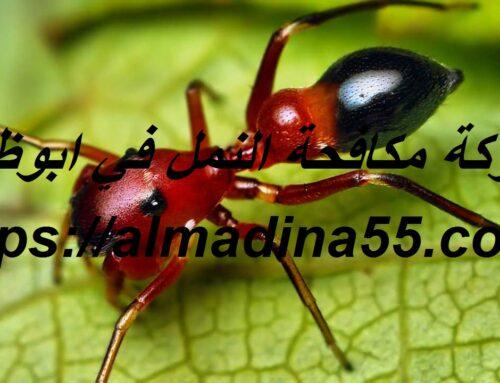 شركة مكافحة النمل في ابوظبي |0526018454| مكافحة حشرات
