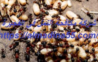 شركة مكافحة النمل في الفجيرة