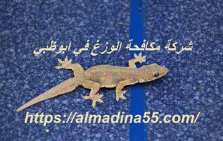 شركة مكافحة الوزغ في ابوظبي