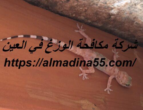 شركة مكافحة الوزغ في العين |0526018454| مكافحة الأبراص