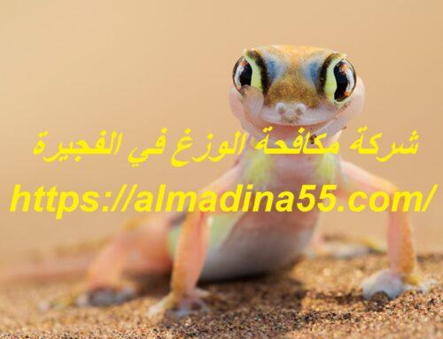 شركة مكافحة الوزغ في الفجيرة |0526018454| مكافحة الأبراص