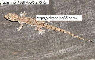 شركة مكافحة الوزغ في عجمان